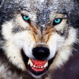 Сахалин без волков