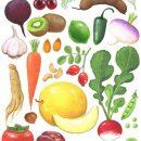 Agro Trade